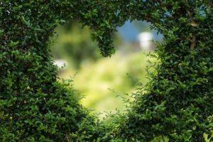heart shape in bushes